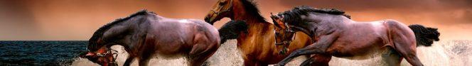 cropped-animal-3099035.jpg