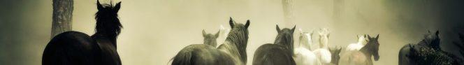 cropped-horses-1759214.jpg