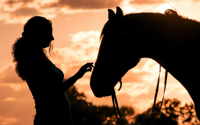 horse-3599874