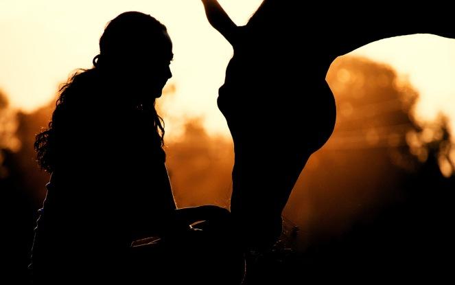horse-3599878