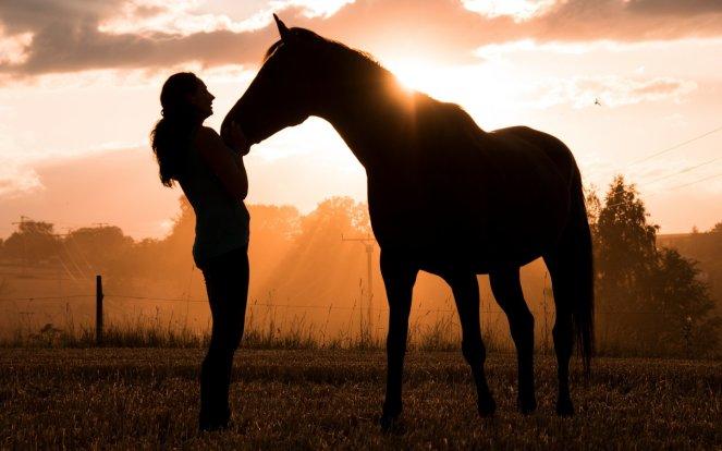 horse-3600323-002